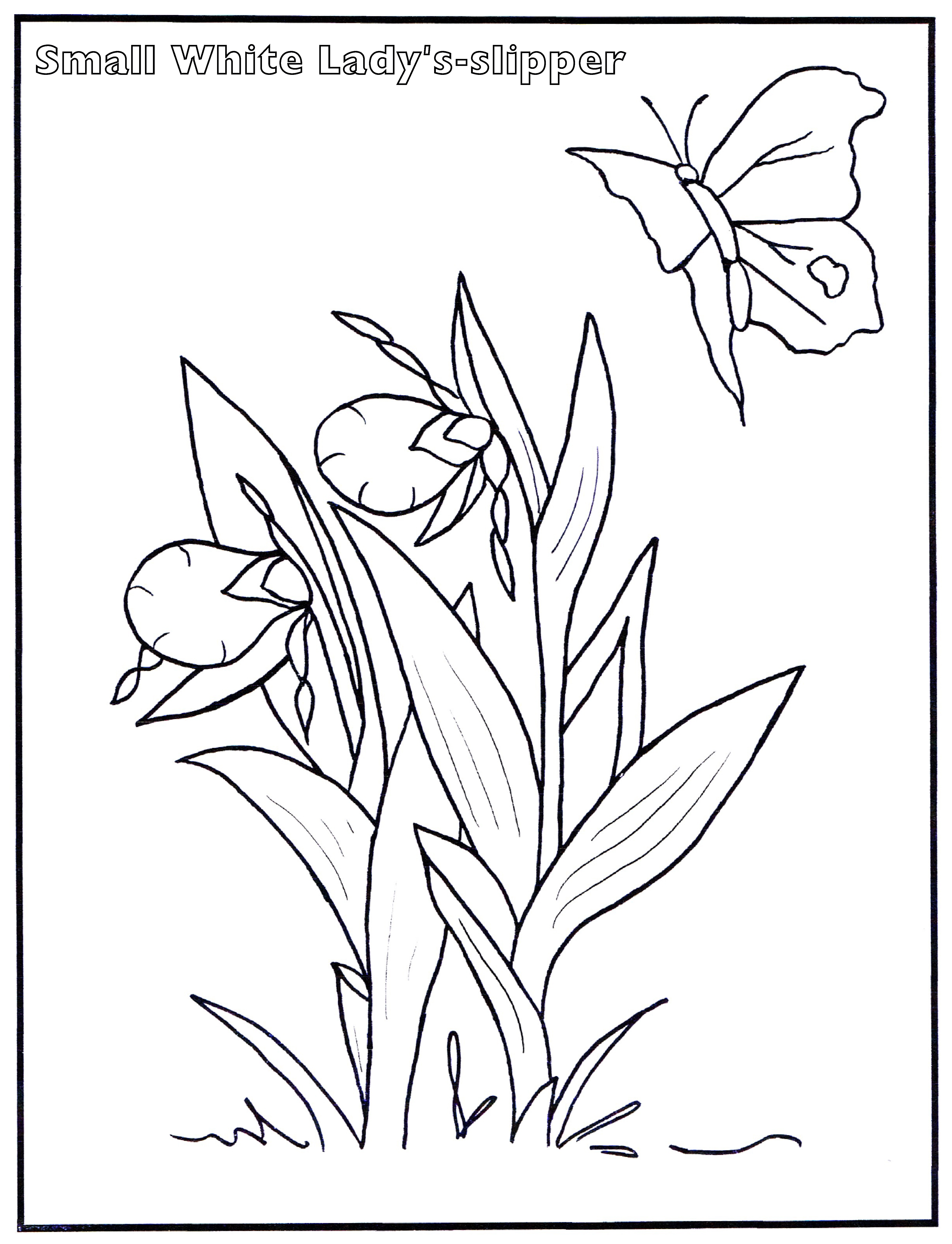 lady slipper flower coloring pages coloring pages